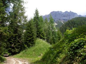 Foto: Datzi / Klettersteig Tour / Rundtour 2. Tage über die Hohe Gamsfeldspitze zur Scheichenspitze ( Biwak ) / Der Weg von der Edelbrunnalm führt am Anfang entlang von Forststraßen ( Mit Blick zum Ramsauer Klettersteig ) / 07.12.2008 20:52:47