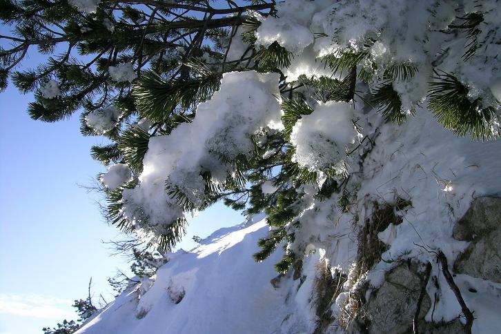 Foto: Andreas Koller / Ski Tour / Leichte Tour auf die Gemeindealpe (1626m) / 15.12.2008 01:05:58