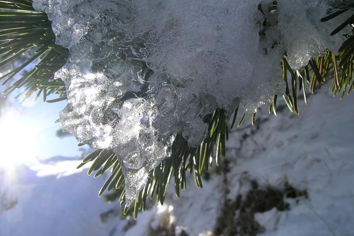 Foto: Andreas Koller / Ski Tour / Leichte Tour auf die Gemeindealpe (1626m) / 15.12.2008 01:05:46