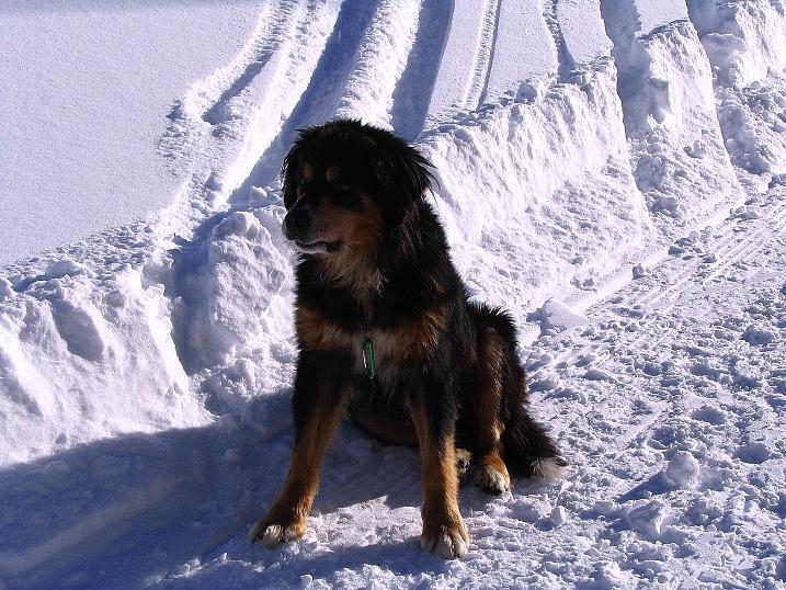 Foto: Andreas Koller / Ski Tour / Anfängertour auf den Spieler (2080m) / Berner Sennenhund bei der Meraner Hütte / 15.12.2008 02:21:29