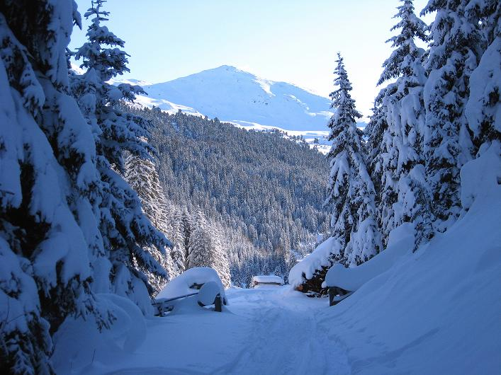 Foto: Andreas Koller / Ski Tour / Vom Durnholzer See auf das Schrotthorn (2590m)  / Schon aus dem Wald erkennt man das Plankenhorn / 16.12.2008 01:29:57