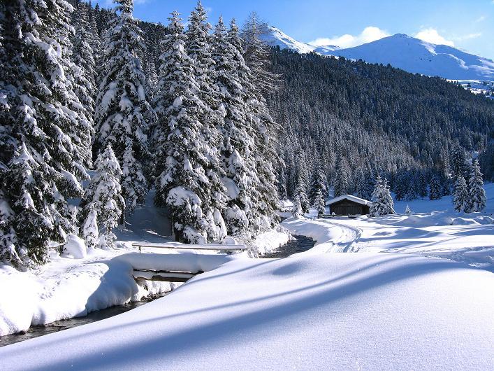 Foto: Andreas Koller / Ski Tour / Vom Durnholzer See auf das Schrotthorn (2590m)  / Verschneiter Wald mit Plankenhorn und Gaishorn (2514 m) / 16.12.2008 01:29:27