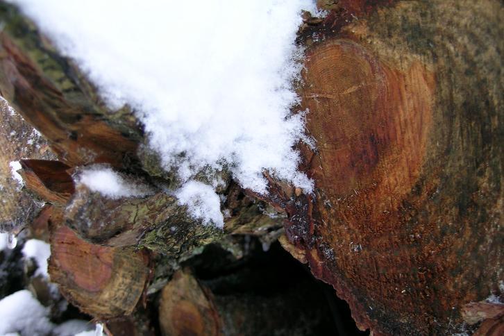 Foto: Andreas Koller / Ski Tour / Der Aibel über dem Mürztal (1394m) / 17.12.2008 00:28:17