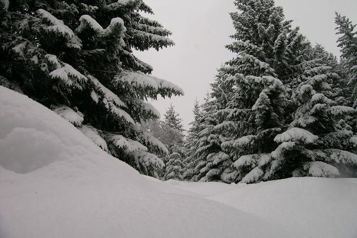 Foto: Andreas Koller / Ski Tour / Der Aibel über dem Mürztal (1394m) / 17.12.2008 00:28:11