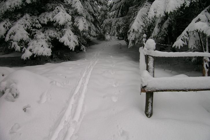 Foto: Andreas Koller / Ski Tour / Der Aibel über dem Mürztal (1394m) / 17.12.2008 00:28:05