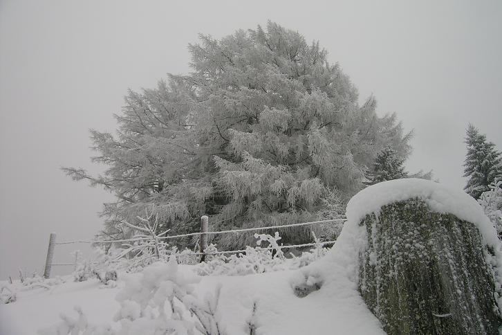 Foto: Andreas Koller / Ski Tour / Der Aibel über dem Mürztal (1394m) / 17.12.2008 00:27:43