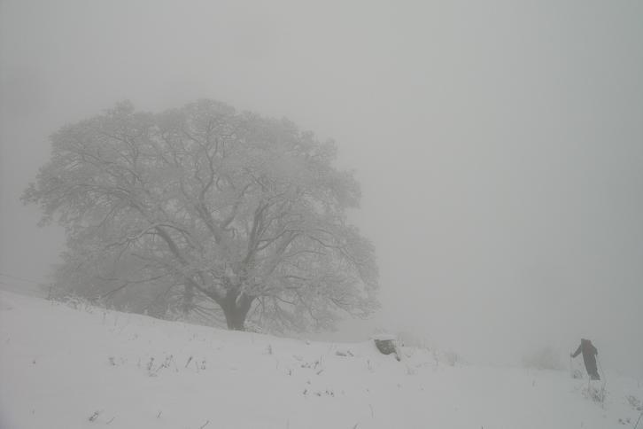 Foto: Andreas Koller / Ski Tour / Der Aibel über dem Mürztal (1394m) / 17.12.2008 00:27:36