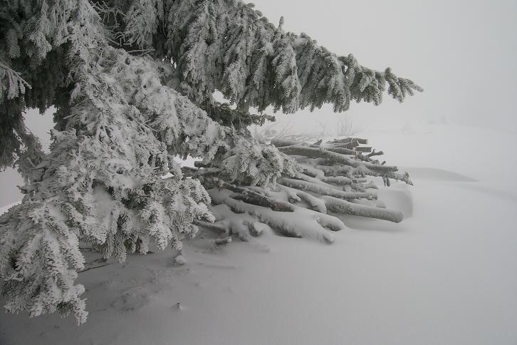 Foto: Andreas Koller / Ski Tour / Der Aibel über dem Mürztal (1394m) / 17.12.2008 00:27:29