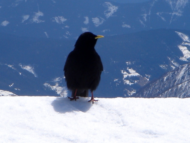 Foto: Manfred Karl / Ski Tour / Über die Laufener Hütte auf den Bleikogel / 18.12.2008 12:16:32