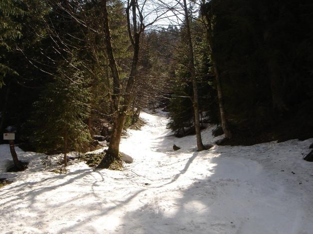 Foto: Manfred Karl / Ski Tour / Über die Laufener Hütte auf den Bleikogel / Baumslalom auf Höhe der Karalm / 18.12.2008 12:10:52
