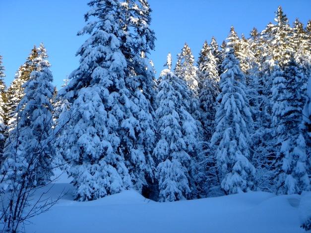 Foto: Manfred Karl / Ski Tour / Von Oberau auf das Roßfeld / Auf dem Weg durch die Achtforstwälder / 18.12.2008 18:06:36