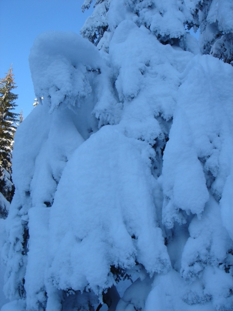 Foto: Manfred Karl / Ski Tour / Von Oberau auf das Roßfeld / 18.12.2008 18:06:08