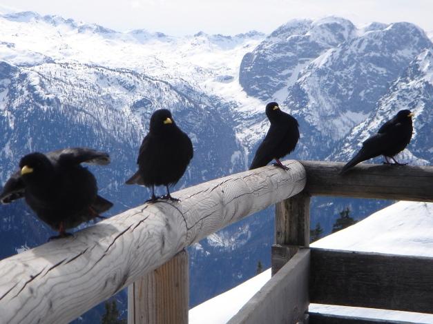 Foto: Manfred Karl / Ski Tour / Jenner, 1874 m / Gibt´s was? / 18.12.2008 18:26:17