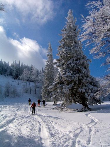Foto: Kurt Schall / Ski Tour / Hochbuchberg 1273 m / 19.12.2008 08:46:46