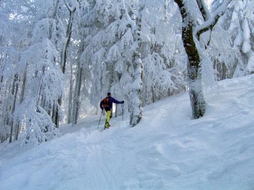 Foto: Kurt Schall / Ski Tour / Hochbuchberg 1273 m / 19.12.2008 08:46:32