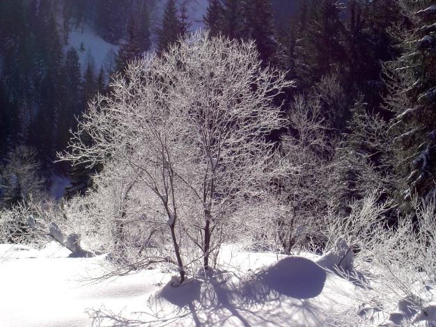 Foto: Manfred Karl / Ski Tour / Hoher First und Dürlstein aus dem Ackersbachgrund / 20.12.2008 12:43:07