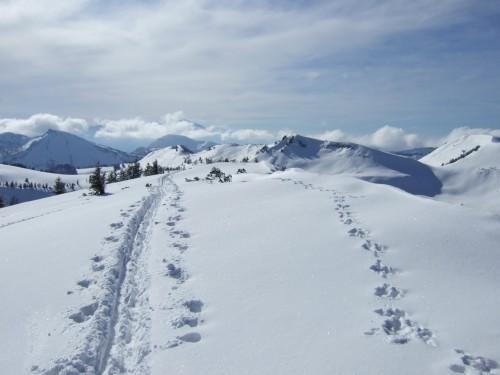 Foto: hofchri / Ski Tour / Pitschenberg (1720m) und Labenberg (1642m) von der Postalm / 21.12.2008 13:32:39