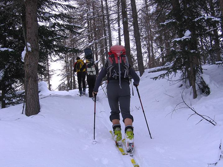 Foto: Andreas Koller / Ski Tour / Aus dem Val Müstair auf den Piz Dora (2951m) / Die Waldzone beginnt gleich nahe des Orts / 23.12.2008 16:17:16