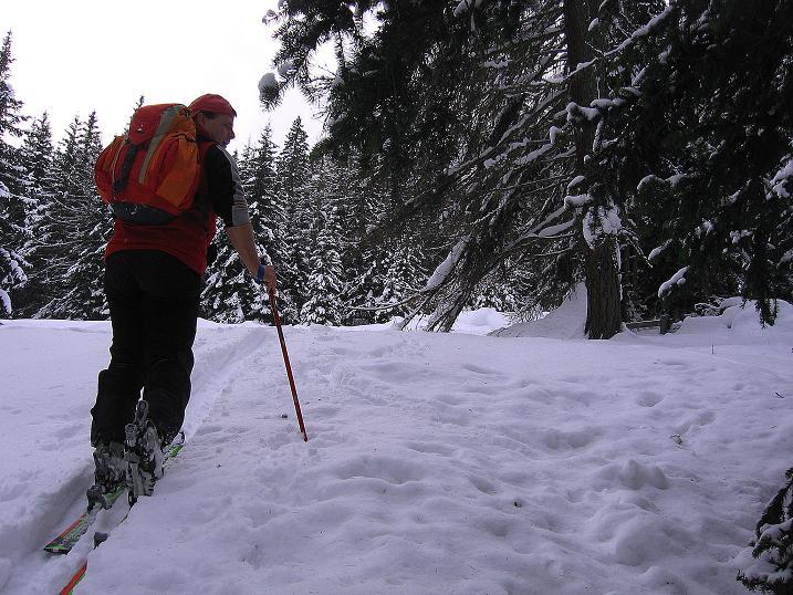 Foto: Andreas Koller / Ski Tour / Aus dem Val Müstair auf den Piz Dora (2951m) / Durch mittelsteile Hänge im Wald / 23.12.2008 16:16:53