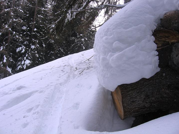 Foto: Andreas Koller / Ski Tour / Aus dem Val Müstair auf den Piz Dora (2951m) / Meist gut gespurt durch den Wald / 23.12.2008 16:16:17