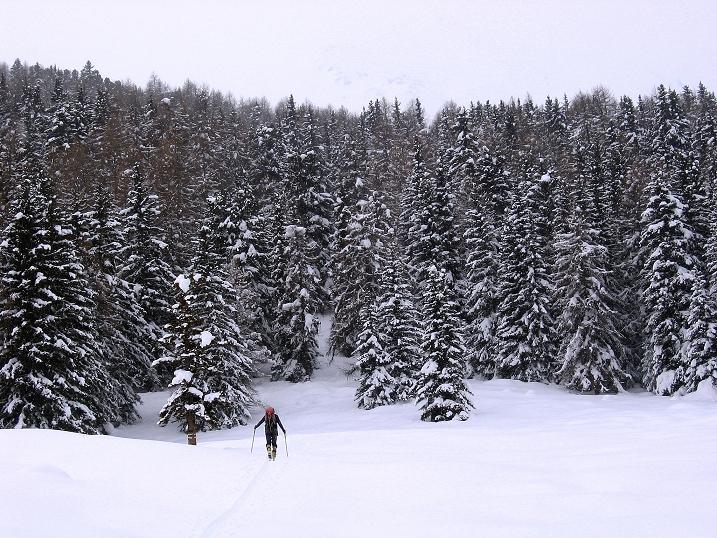Foto: Andreas Koller / Ski Tour / Aus dem Val Müstair auf den Piz Dora (2951m) / Querung der großen Waldlichtung / 23.12.2008 16:15:47