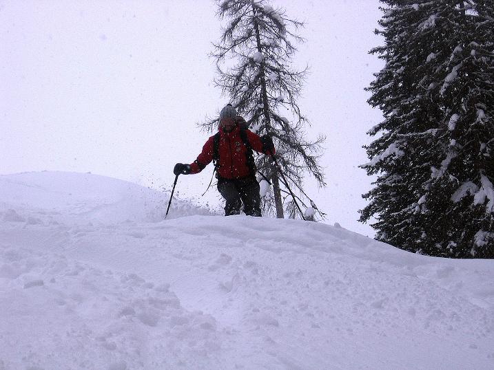 Foto: Andreas Koller / Ski Tour / Aus dem Val Müstair auf den Piz Dora (2951m) / Einfahrt in den tiefer gelegenen Wald / 23.12.2008 16:08:58