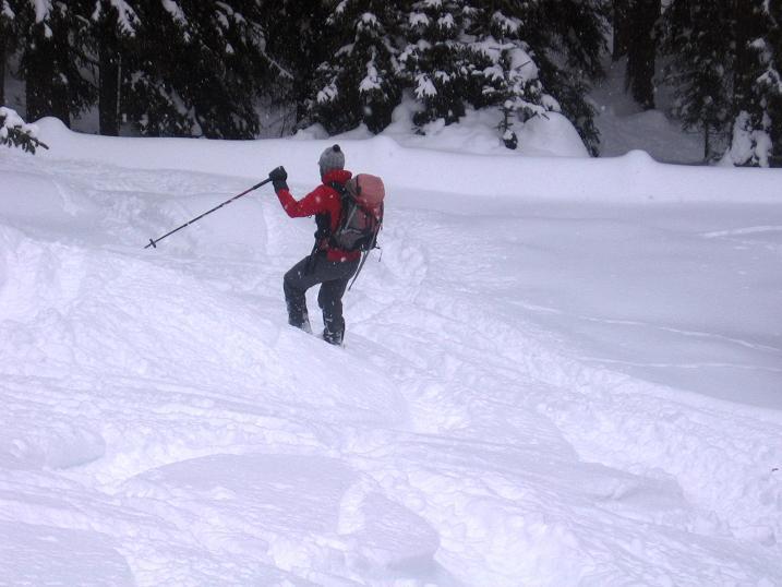 Foto: Andreas Koller / Ski Tour / Aus dem Val Müstair auf den Piz Dora (2951m) / Der letzte Teil der Abfahrt führt wieder durch Wald / 23.12.2008 16:08:39