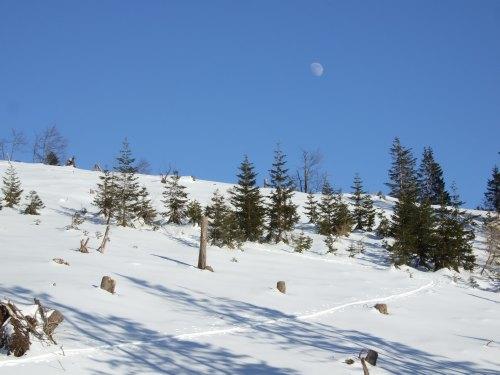 Foto: hofchri / Ski Tour / 4 Gipfeltour in der Osterhorngruppe ab der Gaißau / Aufstieg Ochsenberg / 13.01.2009 12:32:34