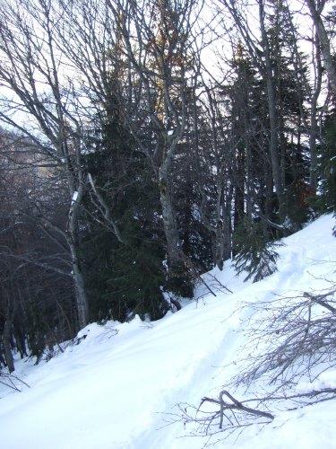 Foto: hofchri / Ski Tour / 4 Gipfeltour in der Osterhorngruppe ab der Gaißau / steile, gefrorene Anstiegsspur im Wald / 13.01.2009 12:36:09
