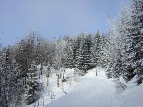 Foto: hofchri / Ski Tour / 4 Gipfeltour in der Osterhorngruppe ab der Gaißau / 13.01.2009 12:30:14