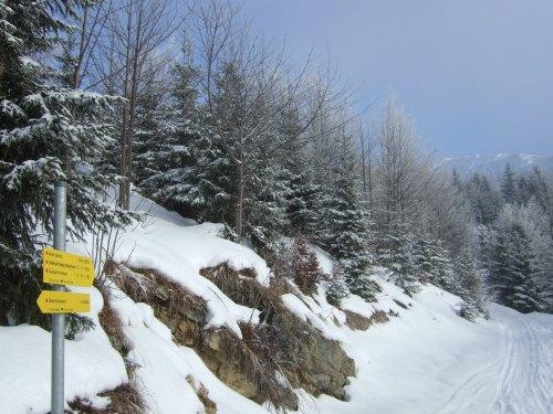 Foto: hofchri / Ski Tour / 4 Gipfeltour in der Osterhorngruppe ab der Gaißau / Abzweigung zum Spielberg  auf 1.170 m / 13.01.2009 12:31:09