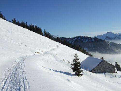 Foto: hofchri / Ski Tour / 4 Gipfeltour in der Osterhorngruppe ab der Gaißau / Forststraße bis zum Ochsenberg / 13.01.2009 12:32:15