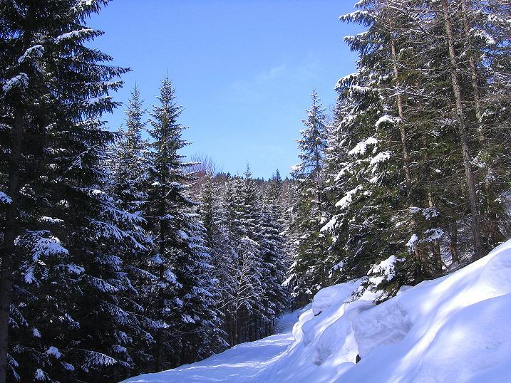 Foto: Andreas Koller / Ski Tour / Durch das Nappental auf die Kräuterin (1919m) / 18.01.2009 23:36:21
