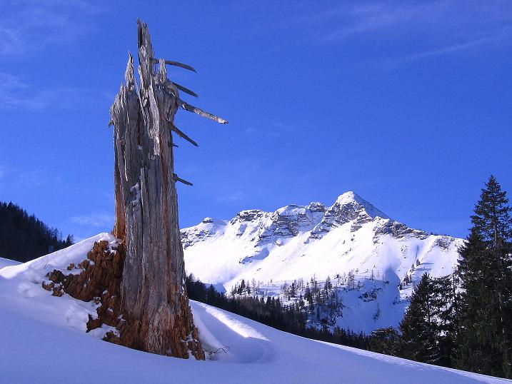 Foto: Andreas Koller / Ski Tour / Durch das Nappental auf die Kräuterin (1919m) / Blick auf den Fadenkamp (1804 m) / 18.01.2009 23:35:12