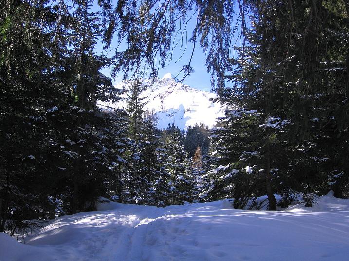 Foto: Andreas Koller / Ski Tour / Durch das Nappental auf die Kräuterin (1919m) / 18.01.2009 23:34:18