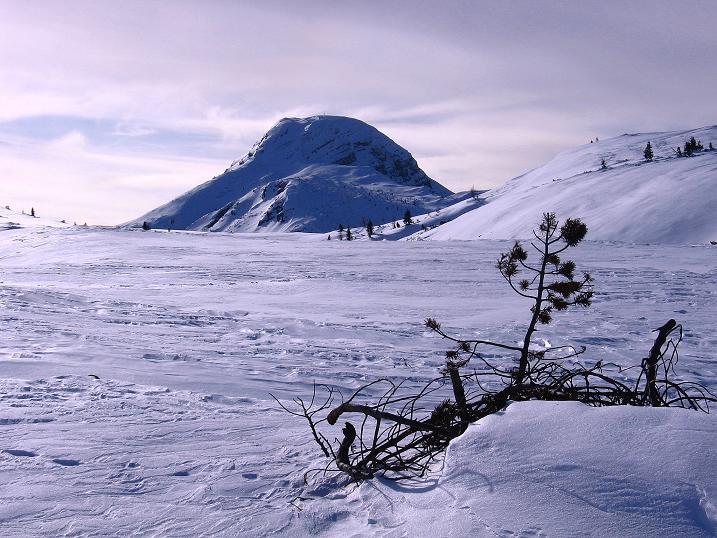 Foto: Andreas Koller / Ski Tour / Durch das Nappental auf die Kräuterin (1919m) / Nur wenig überragt der Hochstadl die Hochfläche der Kräuterin / 18.01.2009 23:31:20