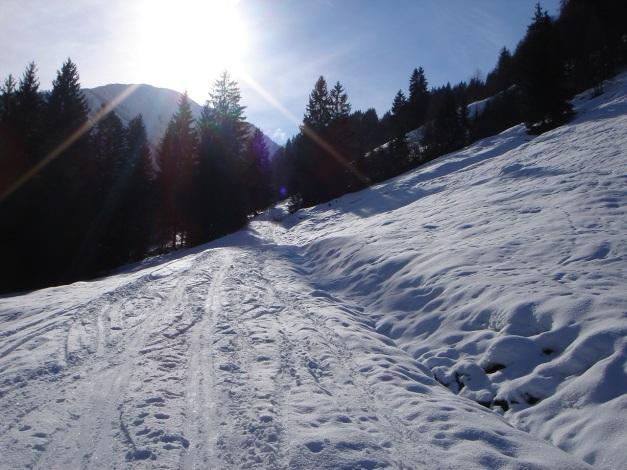 Foto: Manfred Karl / Ski Tour / Vom Gasthof Winkelmoos auf den Karstein / Der kurze Weg am Beginn des Anstieges; über die hintere Wiese geht es dann nach rechts in den Wald / 26.01.2009 20:35:00