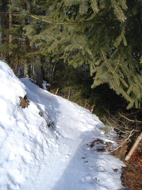 Foto: Manfred Karl / Ski Tour / Vom Gasthof Winkelmoos auf den Karstein / Nach dem schmalen Waldweg erreicht man freies Gelände / 26.01.2009 20:31:17