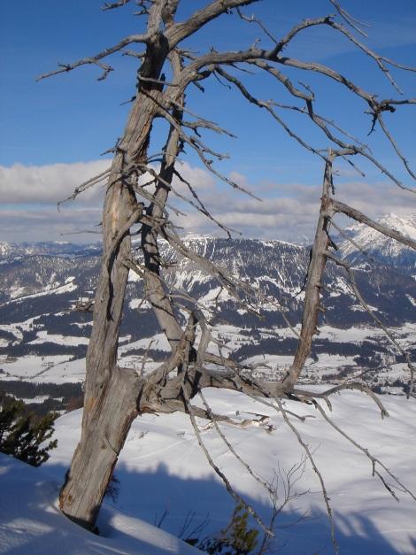 Foto: Manfred Karl / Ski Tour / Vom Gasthof Winkelmoos auf den Karstein / 26.01.2009 20:25:56