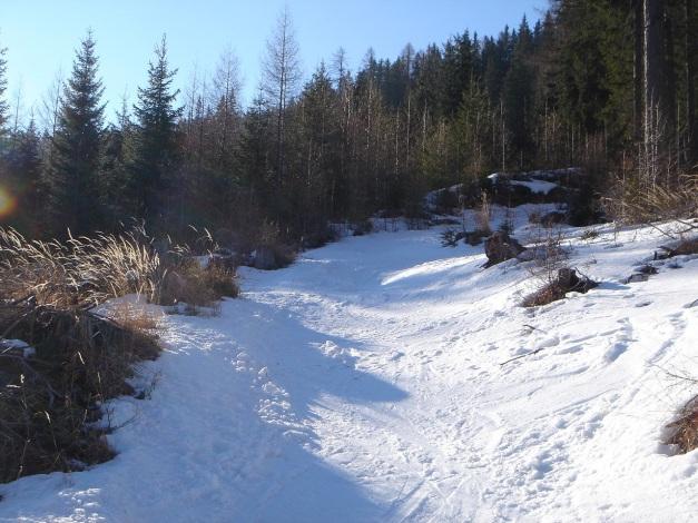 Foto: Manfred Karl / Ski Tour / Durch die Hölle auf das Weißeck / Ein schmaler Weg führt durch den Wald in die Hölle hinauf / 26.01.2009 22:18:33