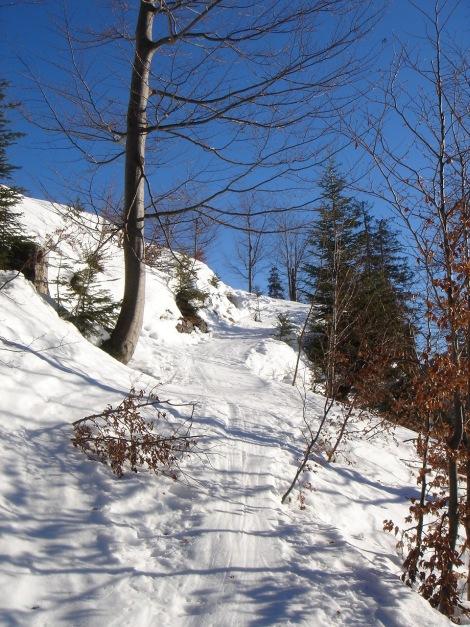 Foto: Manfred Karl / Ski Tour / Grobriedel (1473m) / Bitte unbedingt an den Weg halten, teilweise durchsteigt man auch Jungwaldpflanzungen! / 27.01.2009 06:43:05