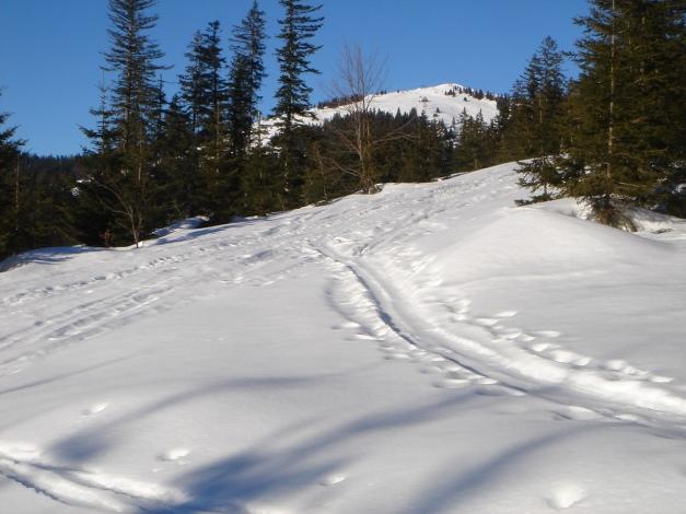 Foto: Manfred Karl / Ski Tour / Grobriedel (1473m) / Es geht immer knapp neben der Piste aufwärts / 27.01.2009 06:42:06