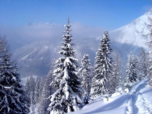 Foto: Manfred Karl / Ski Tour / Schartwand, 2339 m und Brietkogel, 2316 m / Unterhalb der Hackel Hütte / 29.01.2009 19:13:54