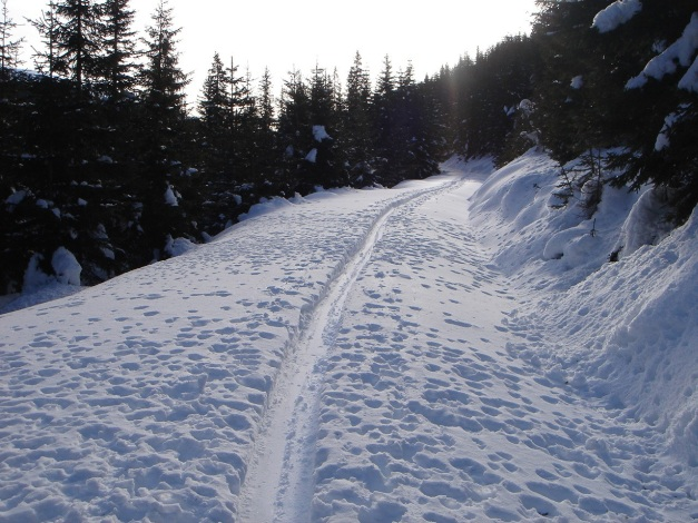 Foto: Manfred Karl / Ski Tour / Über die Steffeialm auf den Wirtsnock / Kurz nach dem Startpunkt / 29.01.2009 19:55:12