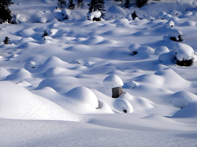 Foto: Manfred Karl / Ski Tour / Über die Steffeialm auf den Wirtsnock / Zwergerlgarten / 29.01.2009 19:53:46