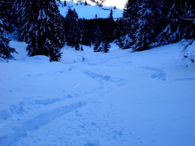 Foto: Manfred Karl / Ski Tour / Über die Steffeialm auf den Wirtsnock / Abfahrtsvariante durch die Schneise nördlich der Steffeialm / 29.01.2009 19:37:11