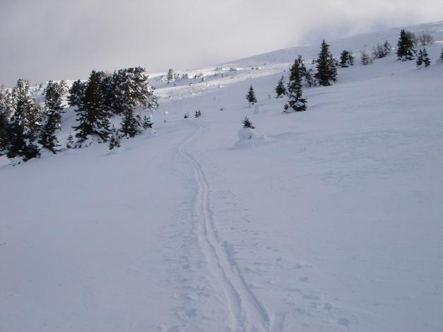 Foto: Manfred Karl / Ski Tour / Mühlhauserhöhe, 2216 m / Kurz nach dem Verlassen des Hochwaldes / 29.01.2009 20:18:40
