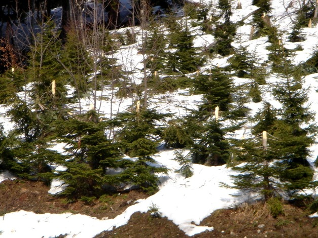 Foto: Manfred Karl / Ski Tour / DER Strichkogelklassiker über das Sulzkar und das Tiefenkar / Lawinenschaden / 29.01.2009 22:31:24