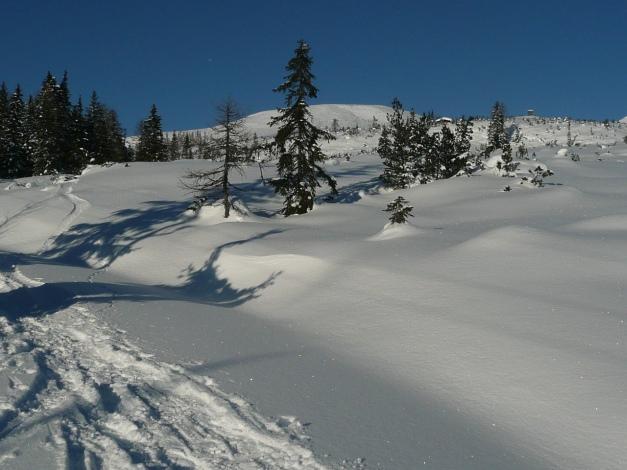 Foto: Manfred Karl / Ski Tour / Leckriedel, 1846 m / Von der Waldgrenze aus überblickt man gut den weiteren Anstieg / 30.01.2009 22:28:59