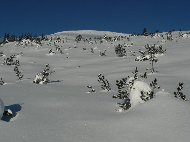 Foto: Manfred Karl / Ski Tour / Leckriedel, 1846 m / 30.01.2009 22:25:14